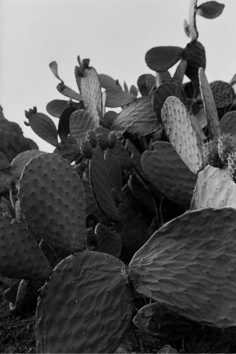 photoblog image Gran Canaria agreste